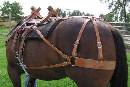 Hc 880 Sawbuck Package Three Hard Sided Panniers Horse Mule
